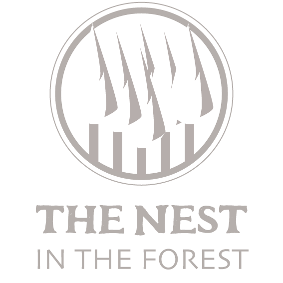 THE NEST IN THE FOREST